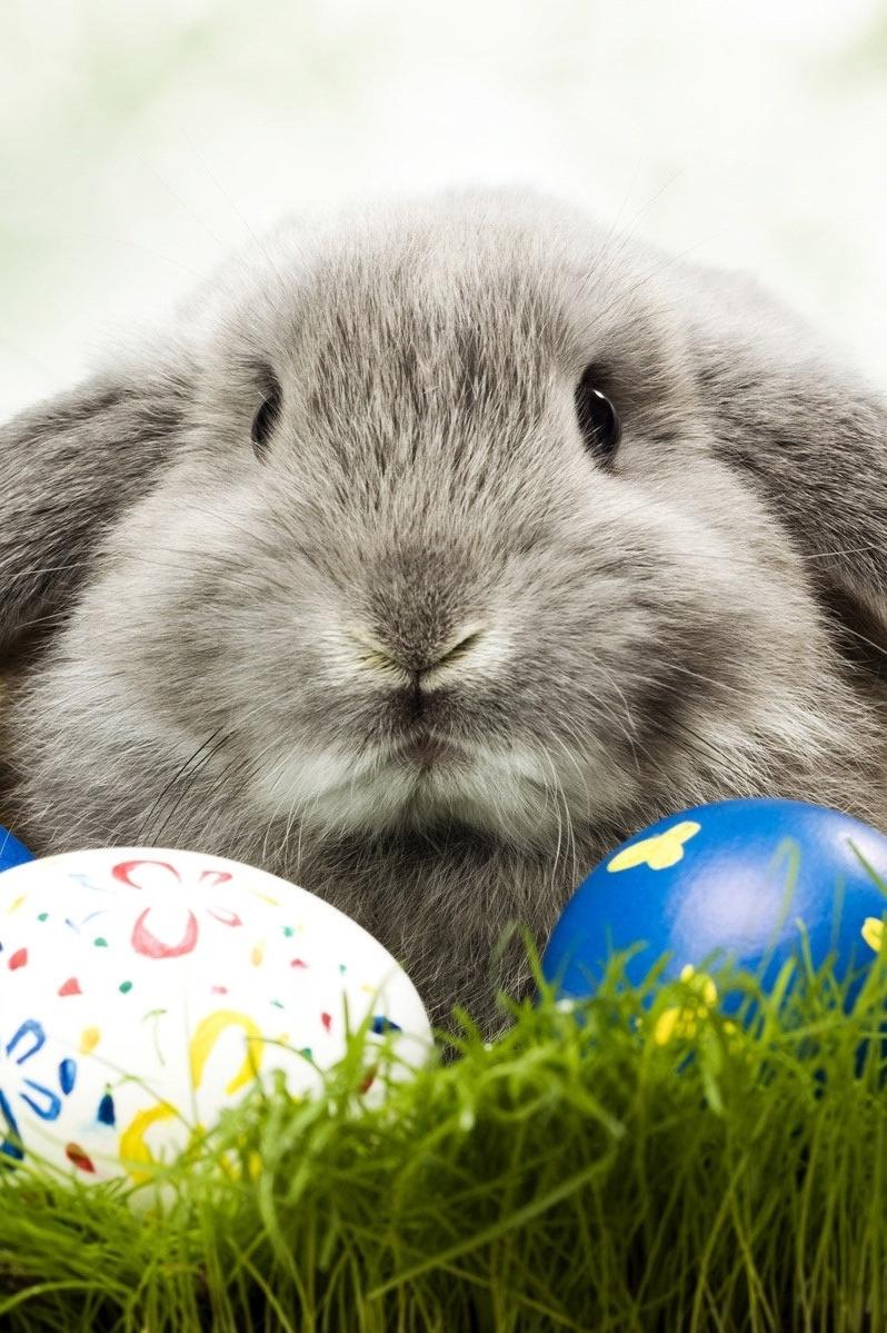 Саша грей пасхальные кролики 5 фотография