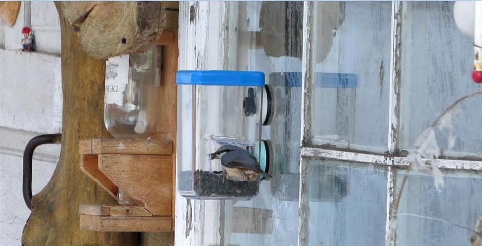 Кормушки для птиц на окне своими руками
