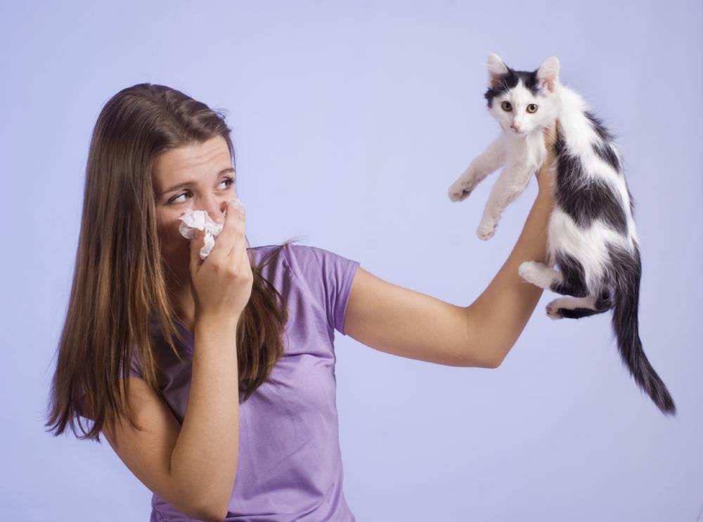 аллергия на домашних животных, лечение аллергии