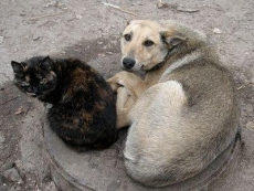 Защитники бездомных животных обратились к депутату Госдумы