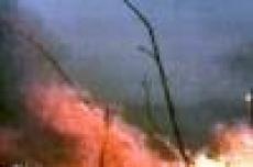 Марий Эл каждые сутки теряет порядка 10 гектаров леса