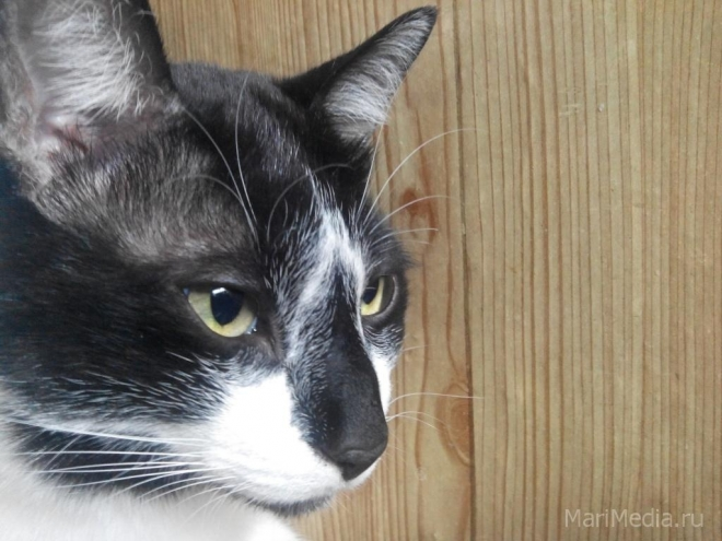 В Марий Эл идентифицируют собак и кошек