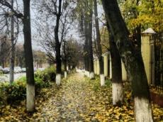 Более одной тысячи старых деревьев будет снесено в Йошкар-Оле