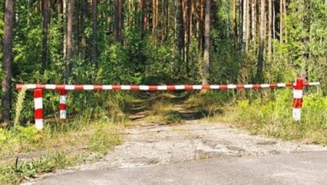 В Марий Эл ограничено пребывание граждан в лесах