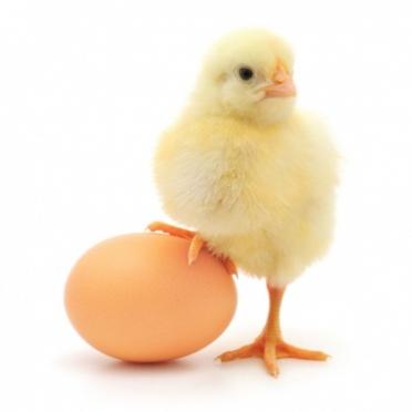 Аграрии Марий Эл вынуждены поднимать цены на яйца, молоко и картофель
