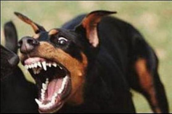 В Марий Эл на посетителей бара напала разъяренная собака