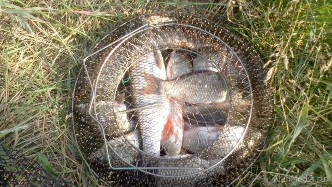 Рыбаки готовятся к Кубку Марий Эл по ловле рыбы на донную удочку