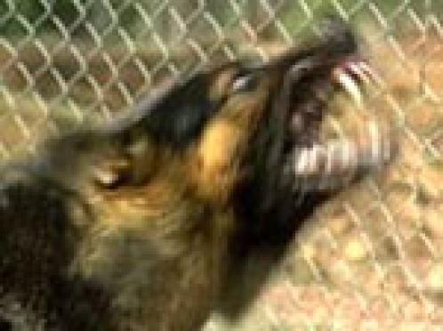 В столице Марий Эл уничтожили более 12 500 бездомных животных