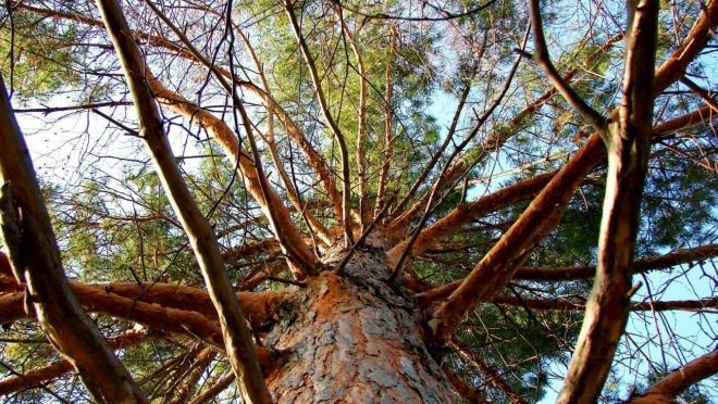 На 49-летнего жителя Звениговского района упало дерево