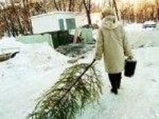 В Йошкар-Оле двухметровую «новогоднюю красавицу» оценили в 250 рублей