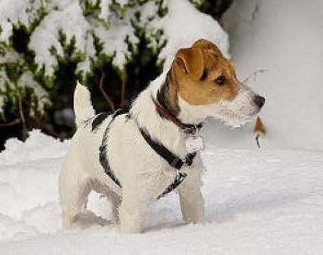 Берегите собак от пиротехники в Новогодние праздники