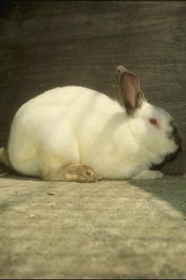 Выставка животных «Братец кролик. Новая коллекция» постер