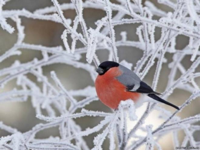 Спасатели предупреждают об аномально холодных выходных