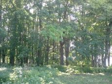 Двое грибников пропали за сутки в марийских лесах