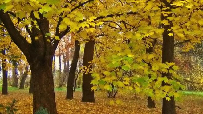 Житель Марий Эл случайно вырубил лес на полмиллиона рублей