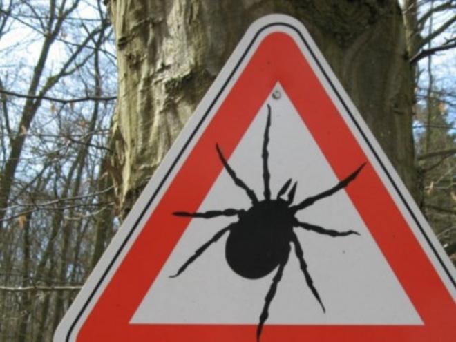 Клещи охотятся в лесах и населенных пунктах