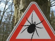 В Марий Эл 23 человека подцепили инфицированных клещей