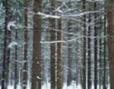 Режим ЧС в лесах Марий Эл может быть продлен до конца года