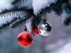 Обитатели Медведевского зоопарка (Марий Эл) «утилизируют» отслужившие новогодние елки