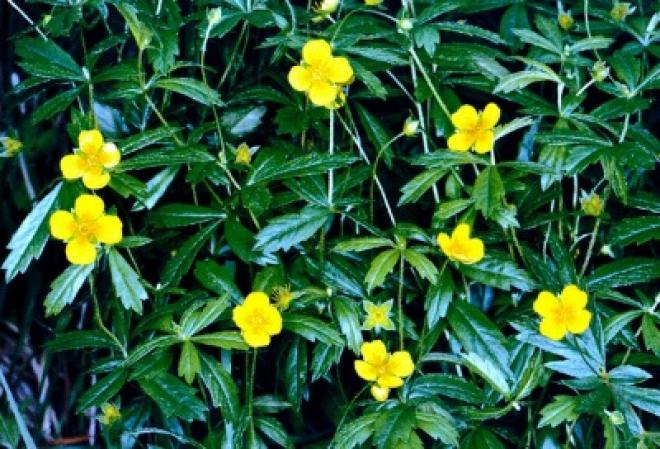 Редкое растение высажено в Мари-Турекском районе