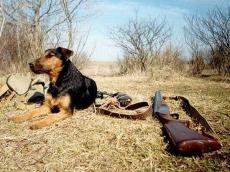2 500 охотников Марий Эл получили разрешения на отстрел дичи