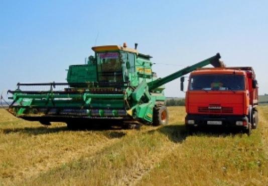 Средняя урожайность этим летом в Марий Эл составляет 22,4 центнера с гектара