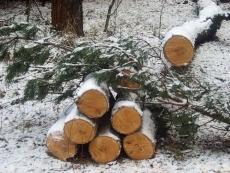 В Медведевском районе ищут «черных лесорубов»