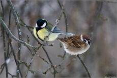 Жителей Марий Эл призывают спасать замерзающих птиц