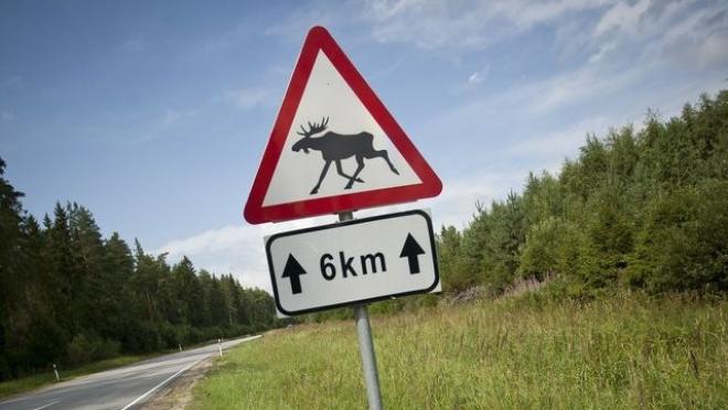 Минприроды предупреждает водителей о животных на загородных трассах