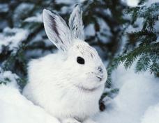 В лесах Марий Эл пройдет большая перепись животных и птиц