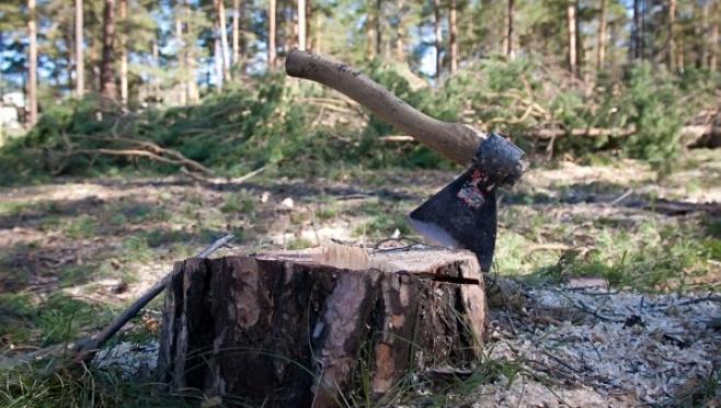 Сотрудники полиции ведут розыск чёрных лесорубов, орудовавших в Моркинском районе