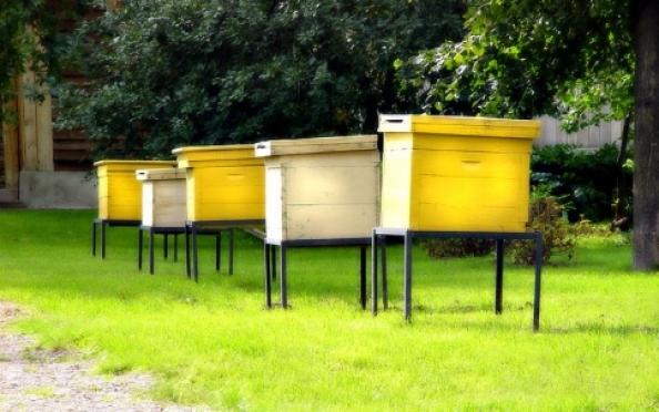 Двое жителей Марий Эл покусились на имущество пчеловода