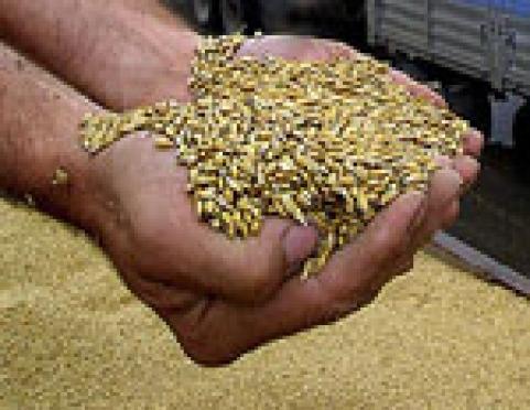 В Марий Эл сделана заявка на закупку дополнительной партии зерна из государственного фонда