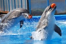 Дельфинарий открывает гастрольный тур в Йошкар-Оле с благотворительного представления