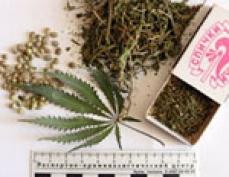 Наркополицейские Марий Эл за год изъяли свыше 20 кг наркотиков