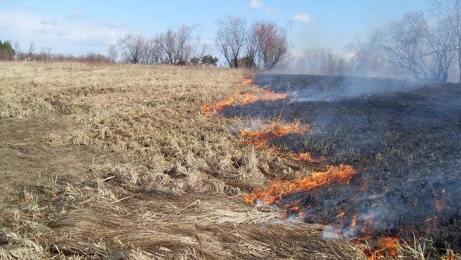 В Марий Эл зарегистрированы первые случаи загорания сухой травы