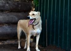 Подари дом! Во Всемирный день бездомных животных посетители сайта marimedia.ru рассказали о своих питомцах
