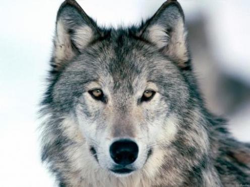 В Марий Эл меняются правила охоты