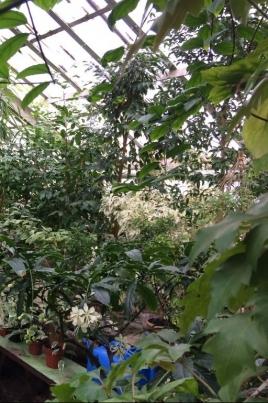 День открытых дверей в ботаническом саду постер