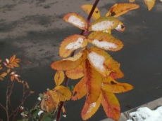 Октябрь в Марий Эл начнется с минусовых отметок