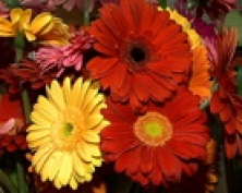 """Когда цветы не для любимой. Выбор подарка к 8 марта в программе """"Детали с Ильей Королевым"""""""