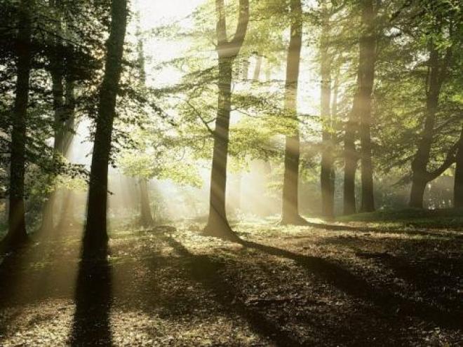 «Бесхозные» леса в Марий Эл смогут обрести владельцев