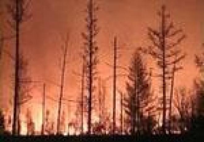 Горящий лес в Марий Эл пока не поддается тушению