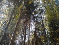 Прокуратура нашла в Медведевском районе бесхозный лес