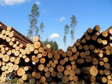 Предприниматель из Марий Эл незаконно экспортировал в страны ближнего зарубежья лес