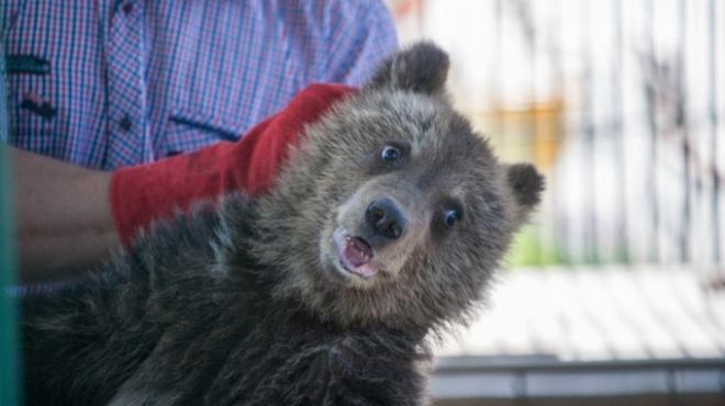 В Нижегородской области спасён трехмесячный медвежонок