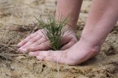 В Марий Эл площадь леса увеличится на 1450 гектаров