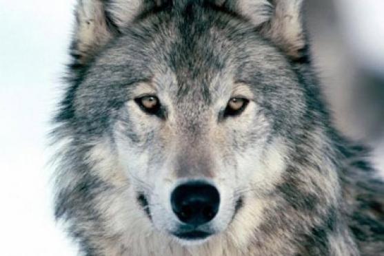 В Марий Эл подведены итоги «переписи животных»