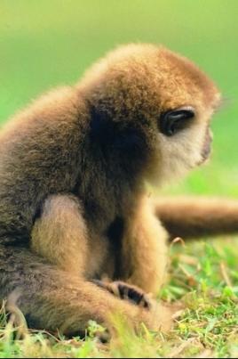 Выставка животных «Тайны тропиков» постер
