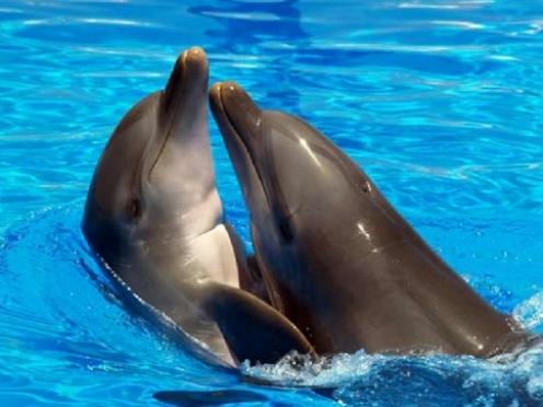 В Йошкар-Олу приехали дельфины и белый кит